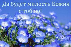 Blue Flowers - Beautiful Flowers Wallpapers and Images Dandelion Flower, Hydrangea Flower, Rare Flowers, Flowers Nature, Flowers Pics, Blue Clematis, Blue Flower Wallpaper, Blue Shades Colors, Seaside Park