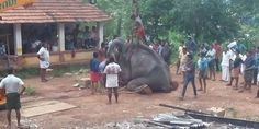 KERALA-INDIA-10.04.2016A young elephant by the name of Erumeli Manikandan died in tragic circumstances... (11868 signatures on petition)