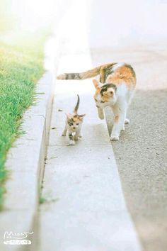 I will follow you wherever you go