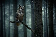 Who's Whoo by Michel Schamp / 500px