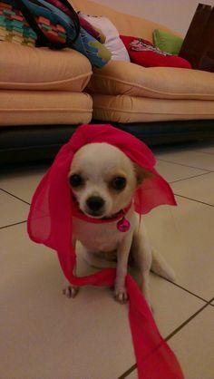 My lovely Dog