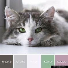 Enjoy your Sunday 💖🐈 - for more palettes like this one 💖🌈💖 Paint Color Combos, Colour Pallette, Colour Schemes, Color Blending, Color Mixing, Pallett Ideas, Color Psychology, Cat Colors, Color Theory