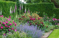 David Austin Roses, Albrighton, Shropshire