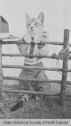 "1920s: ""Cat dressed as cowboy with fence""  thanks to the great state of North Dakota for this little gem"