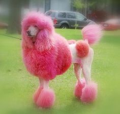Pink Poodle. Wonder what those hip pom pons are for.