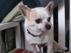 Adopt a senior dog - their love is seasoned.