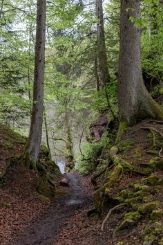 Hiking in the Black Forest, Germany: The Wutach Gorge   Melanie fontaine