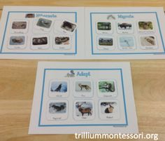 What do animals do in winter?  Hibernate, migrate or adapt?  Sorting mats with photos