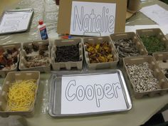 Our Reggio Emilia-Inspired Classroom Transformation: Natural Materials