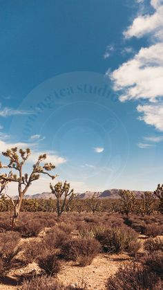 Joshua Tree iPhone Wallpaper - Digital Download ONLY (Suitable for all iPhones, and Androids) 1x