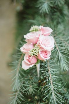 Photo from Kayla+Ben collection by Matt and Julie Weddings Brides, Weddings, Rose, Flowers, Plants, Collection, Beautiful, Design, Pink