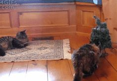 funny-gif-cat-surprise-Christmas-tree-jump