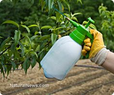 Roundup: The sneaky and cheap contraceptive hiding in your food!  MAKING OUR MEN STERILE!!!!