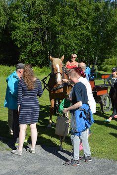 Museovieraat pääsevät rapsuttelemaan heppaa, sillä juhannusiltamille on tultu myös hevoskyydillä.