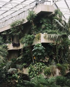 The Barbican Conservatory; a very special place where leaves drip from concrete ledges and vines creep up the walls. The Barbican Conservatory; a very special place where leaves drip from concrete ledges and vines creep up the walls. Indoor Garden, Indoor Plants, Indoor Outdoor, Garden Mulch, Barbican Conservatory, Plant Aesthetic, Brutalist, Garden Beds, Interior And Exterior