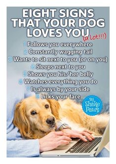 Animals And Pets, Cute Animals, Dog Quotes Love, Cocker, Dog Items, Dog Rules, Dog Boarding, Animal Quotes, Beautiful Dogs