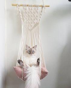 Diy Cat Hammock, Macrame Wall Hanging Diy, Cat Room, Macrame Projects, Diy Projects, Macrame Design, Macrame Patterns, Cat Furniture, Diy Stuffed Animals