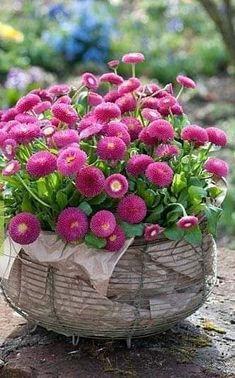 Flowers Garden, Flower Pots, Planting Flowers, Flower Gardening, Container Plants, Container Gardening, Vegetable Gardening, Pink Flowers, Beautiful Flowers