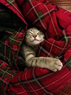 These Snuggled Up Animals In Blankets Will Make You Jealous!