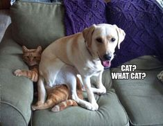 Here is a collection of funny animal pictures of the day - Wackyy animal picdump If you are an animal lover and looking for animal humor, then you like these funny animal pics and memes of the day. Funny Animal Memes, Dog Memes, Funny Animals, Cute Animals, Funny Memes, Memes Humor, True Memes, Funny Videos, Funny Cats And Dogs