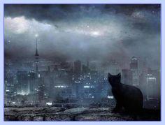 insomni-cat