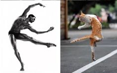 14 Cats Mimicking Models is The Best Thing You'll See Today