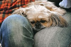 Aj Photography, Dogs, Pictures, Animals, Photos, Animales, Animaux, Pet Dogs, Doggies