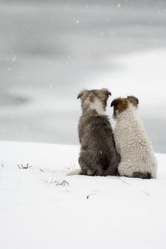 Dogs huddled together in snow Scandinavian Swedish winter