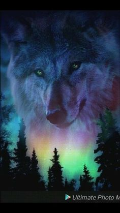 Wallpaper Wallpaper by - - Free on ZEDGE™ now. Browse millions of popular cloud Wallpapers and Ringtones on Zedge and personalize your phone to suit you. Browse our content now and free your phone Tier Wallpaper, Wolf Wallpaper, Animal Wallpaper, Wolf Photos, Wolf Pictures, Anime Wolf, Beautiful Wolves, Animals Beautiful, Madara Wallpaper