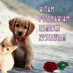 Miłego dnia Good To Know, Animals And Pets, Labrador Retriever, Teddy Bear, Humor, Words, Heart, Good Morning, Funny Stuff