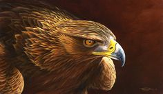 Golden Eagle by Dr. Jeremy Paul, Wildlife Artist
