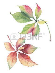 dibujos de hojas de otoño: Botanical illustration of decorative grape leaves…