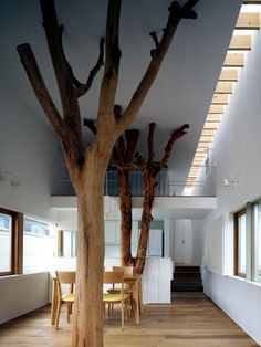 Modern house built in the garden with two trees of sentimental value.