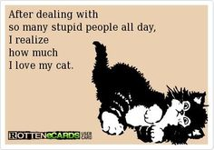 After dealing with so many stupid people all day, I realize how much I love my cat (cats). I Love Cats, Cute Cats, Funny Cats, Cats Humor, Cat Quotes, Animal Quotes, Quotes About Cats, Cat People, Stupid People