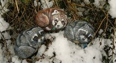 and snow fall....and the raccoons an red pandas are left......