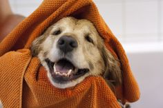 Mutt life muttlife on pinterest our golden retriever gets a bath in the diy dog bath tubs at mutt life milton this ontario pet store will help get your dog clean solutioingenieria Images