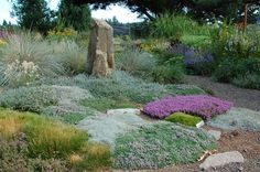 Layered carpet of plants