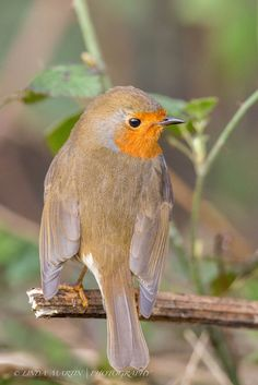 Robin | Flickr - Photo Sharing!