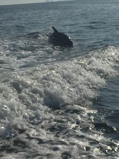 Coastal Life Charters & Adventures offers dolphin encounters coastallifecharters.com Dolphin Encounters, Dolphins, Whale, Coastal, Adventure, Animals, Life, Animales, Whales