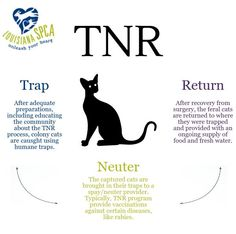Feral cats, when cared for properly, can make great neighbors and perform unique services for a community, like pest control. Consider participating in a Trap-Neuter-Return program to keep your community cats healthy!