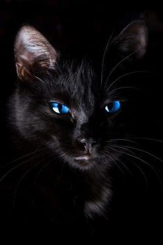 "For ""The Bluest Eye"" -- Junior and Geraldine's Cat"