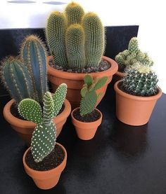 Shop online for all your Cactus and Succulent must haves. Deco Cactus, Cactus Decor, Cactus Flower, Plant Decor, Succulent Terrarium, Cacti And Succulents, Planting Succulents, Planting Flowers, Cactus House Plants