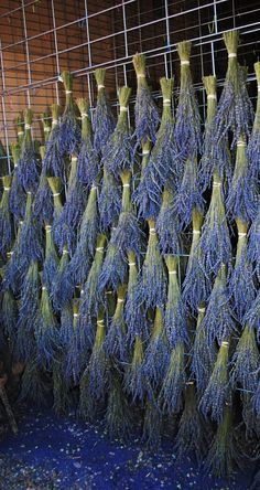 Lavender drying racks in western Colorado. Photo by Jana Magnuson Lavender drying racks in western C Lavender Cottage, Lavender Garden, Lavender Bags, Lavender Fields, Lavender Flowers, Cut Flowers, Purple Flowers, Dried Flowers, Lavenders Blue Dilly Dilly