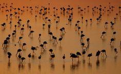 SPAIN / ANDALUSIA / Nature / Landscapes -Marshes of Doñana, National Park, Huelva, Andalusia, Spain. Parque Nacional y Natural Doñana