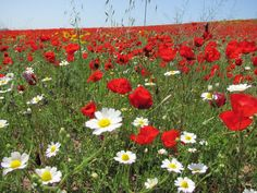 Photo by Rachel of Israel bathed in flowers
