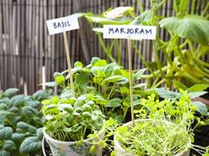 Companion Plants What To Plant With Marjoram Herbs When planting anything in the garden its good to know ahead of time what grows best next to what Use the information f. Easy Herbs To Grow, Growing Herbs, Types Of Christmas Trees, Types Of Herbs, Succulent Wall, Pallets Garden, Pallet Gardening, Herbs Indoors, Gardens