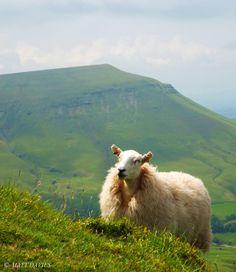 Happy sheep by Matt Davies on 500px