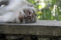 Photo by Laura Monte: Ubud, Bali