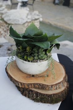 Basic Succulent with wood stumps