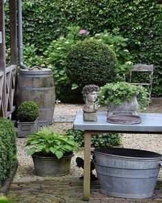 Beautiful Rain Barrel Ideas For Rainwater Harvesting Green Living Sustainable Living Beautiful shade garden with wine barrel rain barrel hostas Back Gardens, Small Gardens, Outdoor Gardens, Cottage Garden Design, Rainwater Harvesting, Summer Garden, Tropical Garden, Shade Garden, Dream Garden